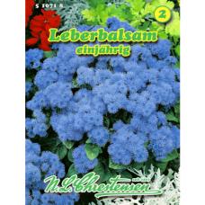 Ageratum houstonianum, Floss flower