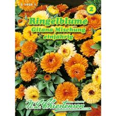 Calendula officinalis, Marigold Gitana, Mix