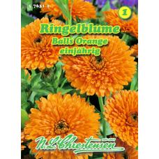Calendula officinalis, Marigold Balls Orange