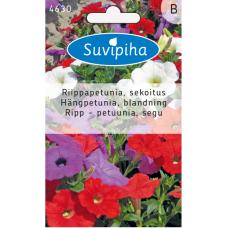 Petunia x hybrida Pendula, Petunia ampel,  mix