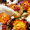 Dried flowers and Ornamental grasses