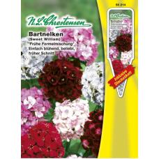 "Dianthus barbatus,cloves ""Early formula mixture"""