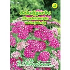 Achillea millefolium, Yarrow