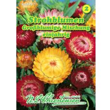 Helichrysum bracteatum, Straw flower Large flower, mix