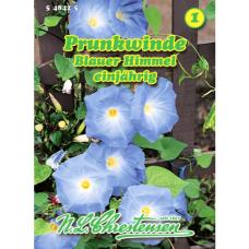 Pharbitis purpurea, Ipomoea purpurea Blauer Himmel