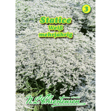 Limоnium tataricum, Statice, white