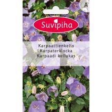 Campanula carpatica, Bluebells, blue