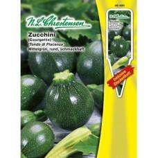 Squash Zucchini Tondo di Piacenza