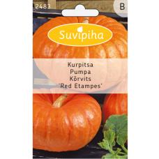 Pumpkin 'Red Etampes'