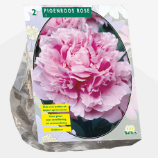 Paeonia ,Peony Pink per 2. SOLD OUT!