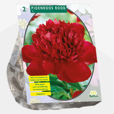 Paeonia ,Peony Red per 2. Sold out!