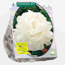 Paeonia ,Peony White per 2. SALE - 20%! SOLD OUT!
