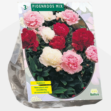 Paeonia ,Peony Mix per 3. Sold out!