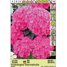 Hydrangea pink Mobheat, Macrophylla. SOLD OUT!