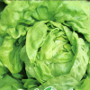Lettuces and spinachs
