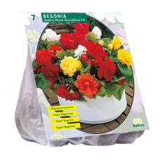 Begonia Dubbel, Mix per 7, SALE - 70%!