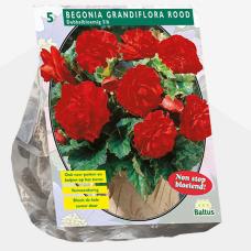 Begonia Grandiflora Double, Red per 5, SALE - 70%!