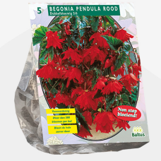 Begonia Pendula, Red per 5. SALE - 70%!