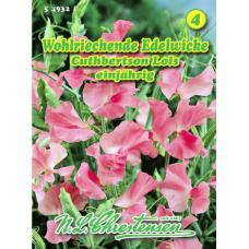 Lathyrus odoratus, Sweet pea 'Cuthbertson Lois'