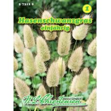 Lagurus ovatus, unny's Tail Grass