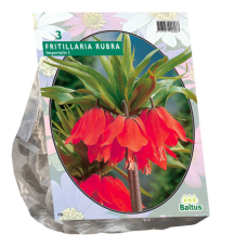 Fritillaria Imperialis Rubra per 3