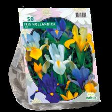 Iris Hollandica, Mix, 50 psc.