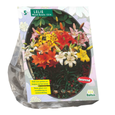 Lilium (Lily) Mixed Asiatic, 5 psc.