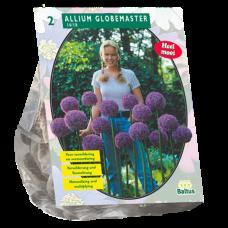 Allium Globemaster, 2 bulbs.