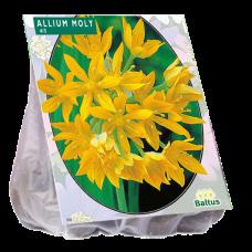 Allium Moly per 100