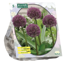Allium Ostara per 5