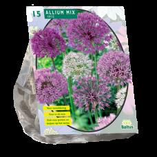 Allium Mix Paars-Wit/ PURPLE-WHITE, 15 bulbs.