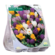 Crocus Grootbloemig, Mix ,Crocus Large Flowered, Mix, 30 bulbs.
