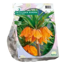 Fritillaria Imperialis Aurora per 3