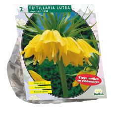 Fritillaria Imperialis Lutea per 2