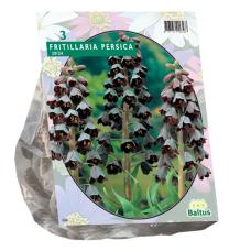 Fritillaria Persica per 3