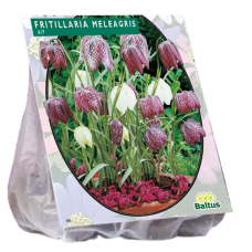 Fritillaria Meleagris per 30