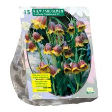Fritillaria Michailovskyi per 15