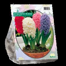 Hyacinthus (Hyacinth), Mix, 3 bulbs.