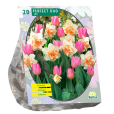 Perfect Duo (Narcissus+Tulipa), mix of Doubles Daffodils and pink Tulips, 20 bulbs.