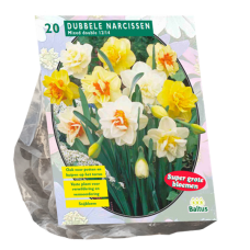 Narcissus (Double large-flowered daffodils), Mix, 20 bulbs.