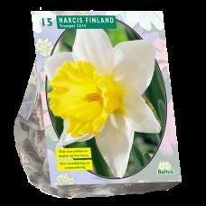 Trumpet Narcissus  (Trumpet Daffodils) Finland, 15 bulbs.