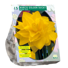 Narcissus Golden Ducat (Double large-flowered daffodils), 15 bulbs.