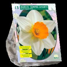 Narcissus Sempre Avanti (Daffodils small cupped), 15 bulbs.