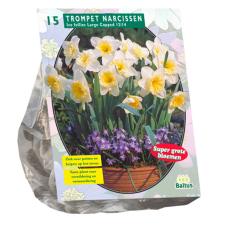 Narcis Ice Follies per 15