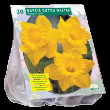Narcis Trompet, Geel, Yellow per 25
