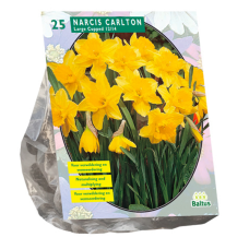 Narcis Carlton per 25