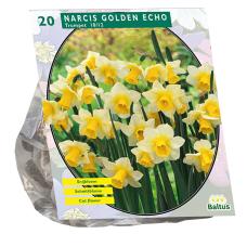 Narcis Golden Echo per 20