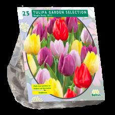 Tulipa  (Tulip) Garden Selection, 25 bulbs.