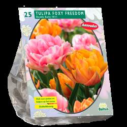 Tulipa (Tulip Double) Foxy Freedom, 25 bulbs.