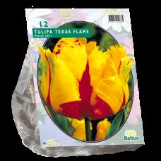 Tulipa (Tulip) Texas Flame, Parrot, 12 bulbs.